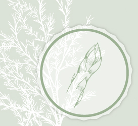 Webdesign Brandenstein Biospargel