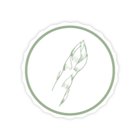 Webdesign für Biospargel Brandenstein - Spargel